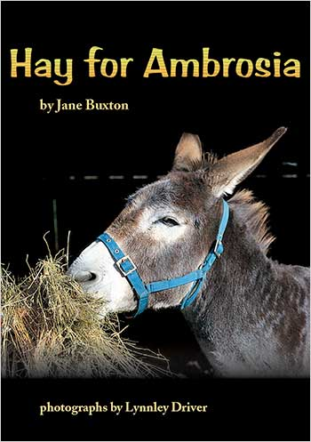Hay for Ambrosia