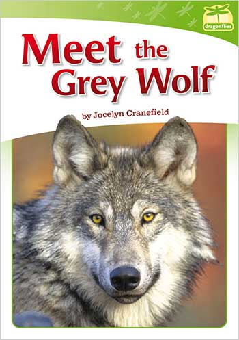Meet the Grey Wolf