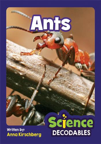 Ants>